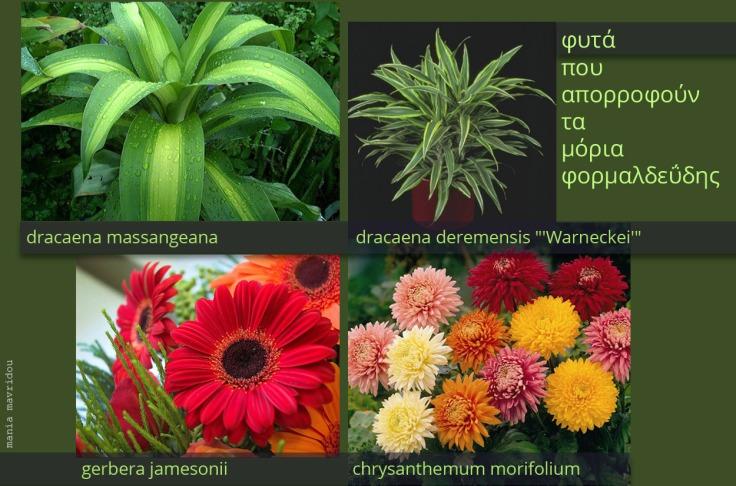 plants-formaldehyde
